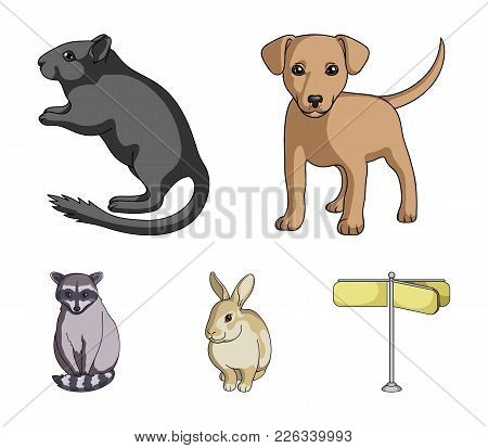 Puppy, Rodent, Rabbit And Other Animal Species.animals Set Collection Icons In Cartoon Style Vector