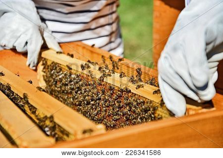 Woman Beekeeper Working With Bees In Apiary.