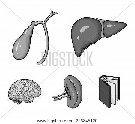 Liver, Gallbladder, Kidney, Brain. Human Organs Set Collection Icons In Monochrome Style Vector Symb