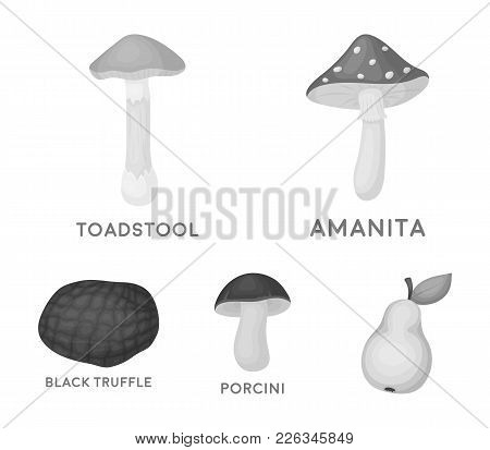 Amanita, Porcini, Black Truffle, Toadstool. Set Collection Icons In Monochrome Style Vector Symbol S