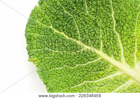 One Savoy Cabbage Leaf Close-up Isolated On White Background Fresh Green Top View