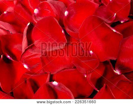 Close Up Of Bright Red Rose Petals