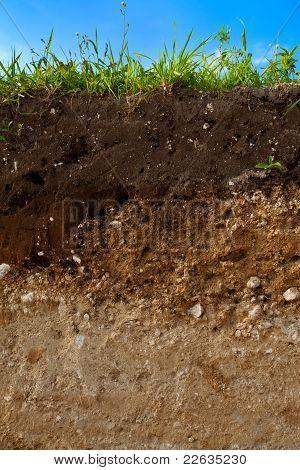 A cut of soil