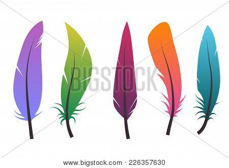 Set Of Colorful Different Feathers. Vector Elements For Your Design.