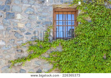 Window With Wild Wine At The Saeben Monastery Above Klausen, South Tyrol, Italy