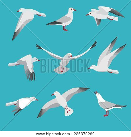 Atlantic Seagull In Different Action Poses. Cartoon Flying Birds Seagull Posing, Wildlife Mascot Cha