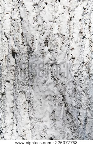 Texture Of Tree. Bark In Whitewash. Background