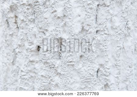 Texture Of Tree Bark In Whitewash. Background