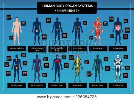 Human Body Internal Organs Circulatory Nervous And Skeletal Systems Anatomy And Physiology Flat Educ