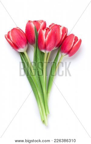 Red tulip flowers bouquet.  Easter or Valentine's day greeting card. Isolated on white background