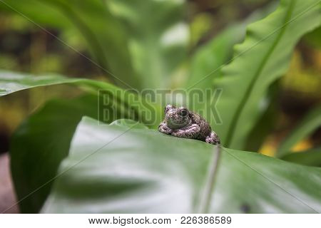 Little Toad On Green Leaf, Nature And Animals Theme