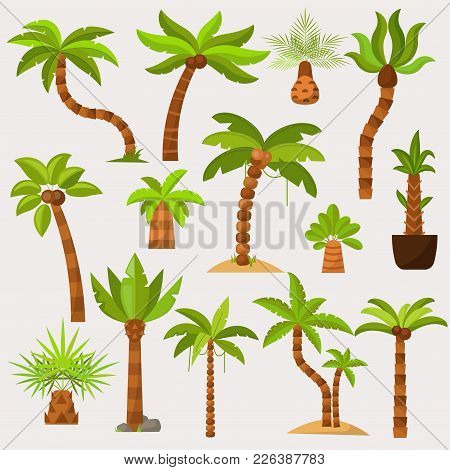 Palma Vector Palmaceous Tropical Tree With Coconut Or Green Exotic Leafs And Palmetto On Tropic Beac