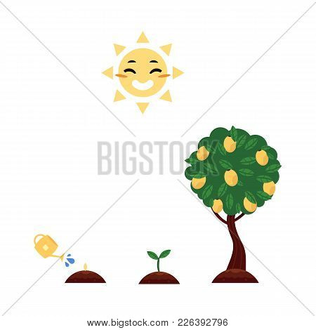 Vector Flat Tree Planting Stages, Symbols Icon Set. Green Tree Apple, Pear Fruits With Foliage, Spro