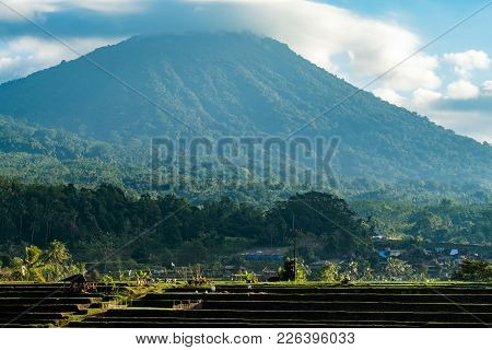 Bali Rice Terraces. The Beautiful And Dramatic Rice Fields Of Jatiluwih In Southeast Bali Have Been