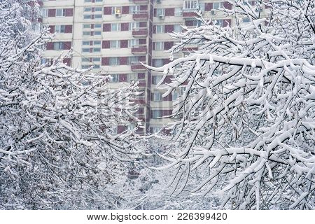 Tree Branches Covered With Snow With Windows Of Dwelling Building On The Background