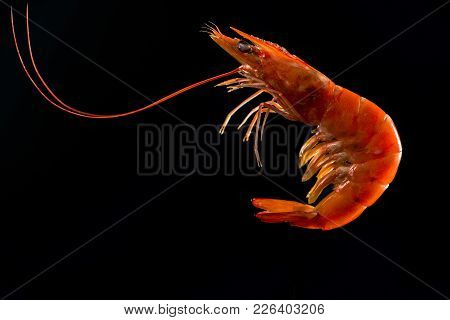 Steamed Shrimp Isolated On Dark Background With Copy Space For Text. Seafood Buffet In Restaurant Co