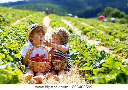 Two Little Sibling Kids Boys Having Fun On Strawberry Farm In Summer. Children, Cute Twins Eating He
