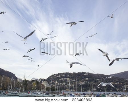 Flying Seagulls In Blue Sky In The Port