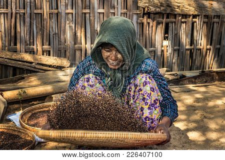 Bagan, Myanmar - January 24, 2016 :  Burmese Farmer Woman Threshes Corn To Remove Chaff