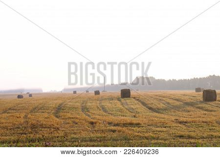 View In The Field And Haystacks On It.