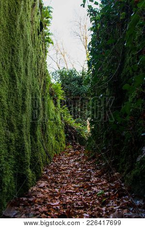 Small Trail Walled By Rocks Filled With Green Leaves, Portugal