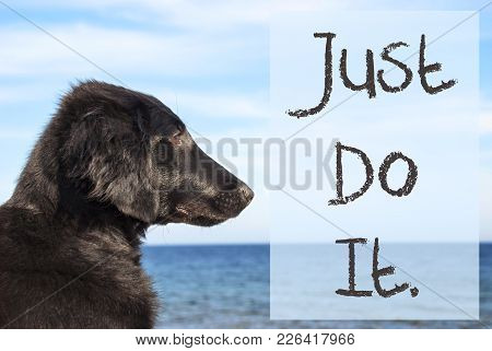 English Text Just Do It. Flat Coated Retriever Dog Infront Of Ocean. Water In The Background