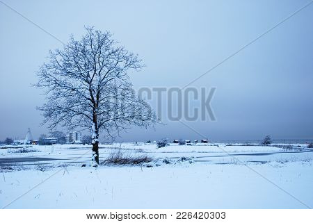 Lone Snowy Tree In A Park At The Swedish Oland