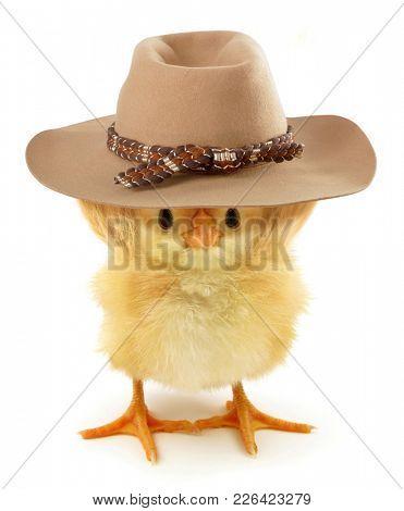 Crazy chick with adventurer hat