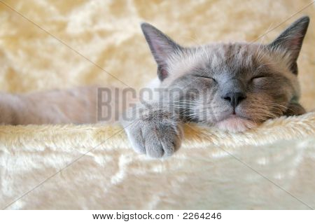 Sleepin' Cat