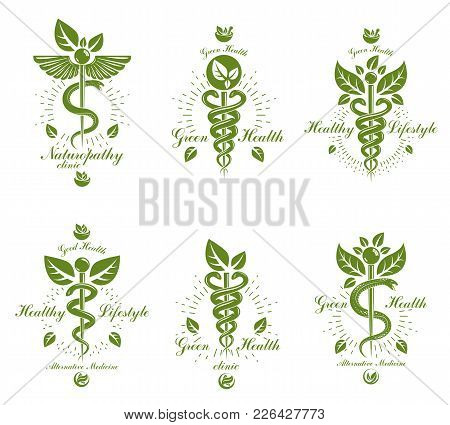Set Of Caduceus Vector Conceptual Emblems Created With Snakes And Green Leaves. Wellness And Harmony