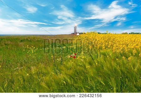 Yellow Flowers On Field With Blue Sky And Clouds. Beautiful Scenery In The South Of Ukraine.