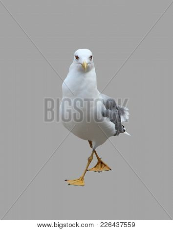 Seagull Seagull Is Depicted On An Isolated Gray Background.