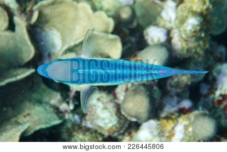 Parrotfishes Are A Group Of Marine Species Found In Relatively Shallow Tropical And Subtropical Ocea