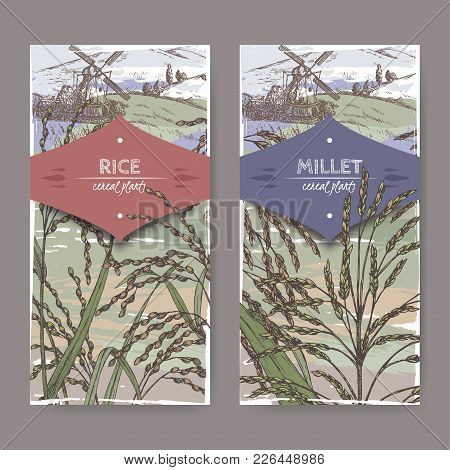 Set Of Two Labels With Asian Rice Aka Oryza Sativa And Proso Millet Aka Panicum Miliaceum Color Sket