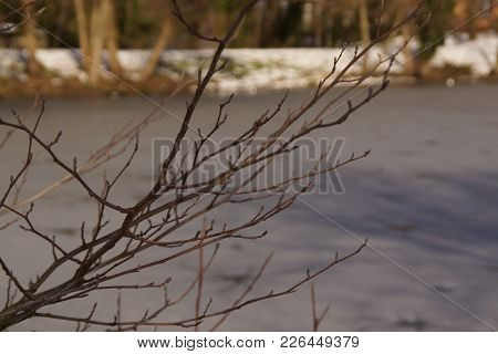 A Fine Branch And Without Sheets In Close-up. In Background We Can Perceive A Forest Covered With Sn