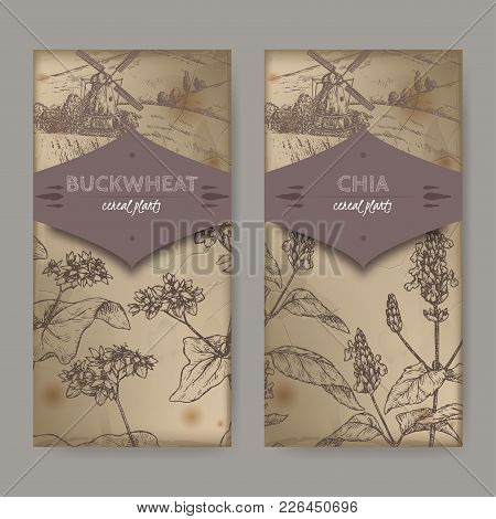 Set Of Two Labels With Fagopyrum Esculentum Aka Buckwheat And Salvia Hispanica Aka Chia Sketch With