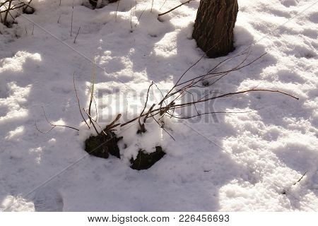 Trees Are Completely Surrounded And Covered With Snow. On The Ground We Perceive Only A Small Part O
