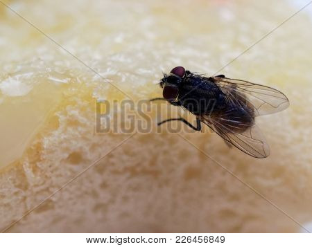 House Flies On Bread With Butter With Pink Plastic Fork Sticking On Over White Plate Show Concept Of