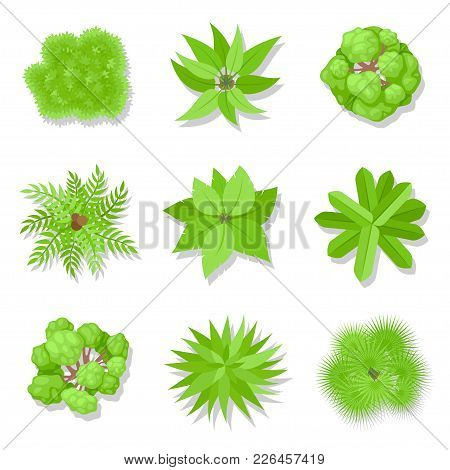 Trees Top View. Green Woody Plants Set With Branches And Leaves, Botany And Ecology Concept. Vector