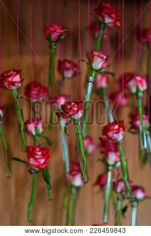 Rose Flowers Hang In Little Apothecary Glass Bottles. Botanical Minimalist Decor, Spring