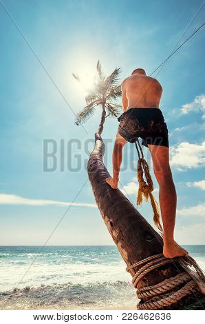 Man Climb On Palm Tree For Swing On The Beach Swing