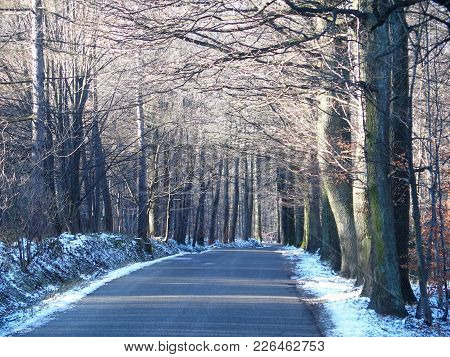 Road Drive In Abandoned Forest Avenue With Two Rows Of Trees Sides In Beskid Mountains Landscapes Ne