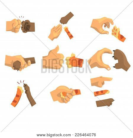 Hand Of A Man Holding Animals Paw Set, Animal And Human Handshake Vector Illustrations On A White Ba