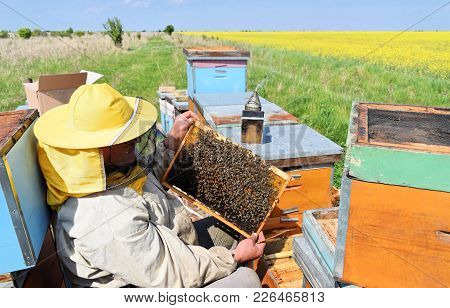 Beekeeper Inspecting His Hive Frames Covered With Bees