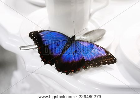 A Blue Butterfly Rests On A Cup Of Porcelain For Tea. The Blue Wings Are Open And The Bright Color A