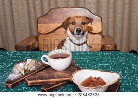 Funny Hungry Jack Russell Dog In Kitchen Eating And Drinking Tea On Table