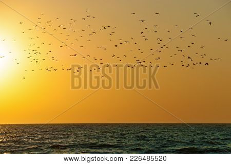 A Flock Of Birds Over The Water On A Sunset Background. Birds Over The Water.