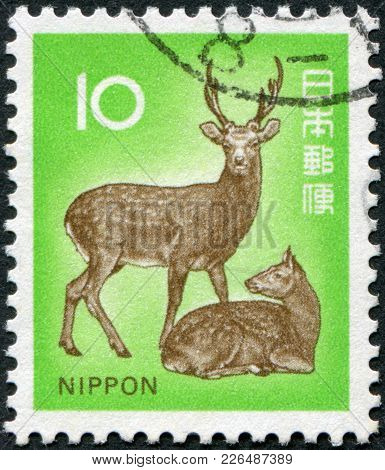 Japan - Circa 1972: A Stamp Printed In Japan, Depicts Cervus Nippon, Circa 1972