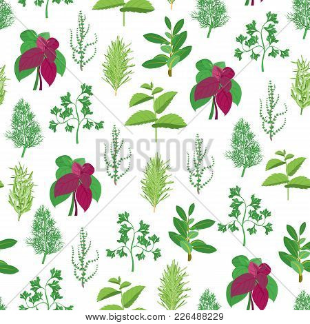 Natural Twig Herb Seamless Pattern Background On A White Dill, Parsley, Basil, Mint, Rosemary, Tarra