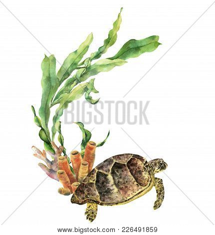 Watercolor Nautical Border With Turtle. Hand Painted Underwater Illustration With Laminaria Branch A